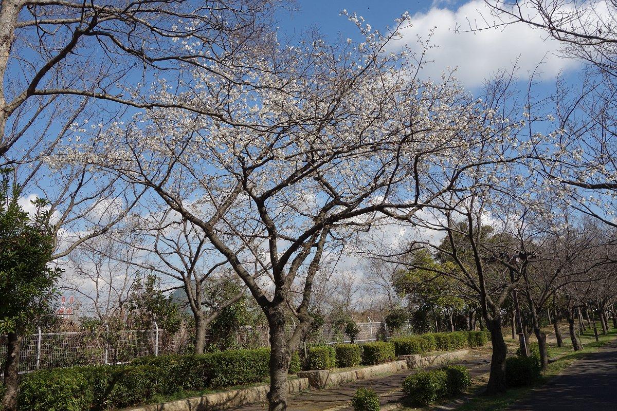 160312ooshima_1
