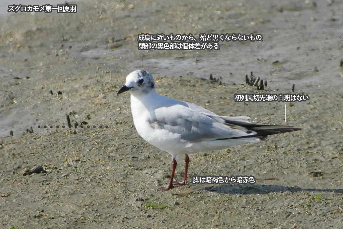 zugurokamom_1sts1