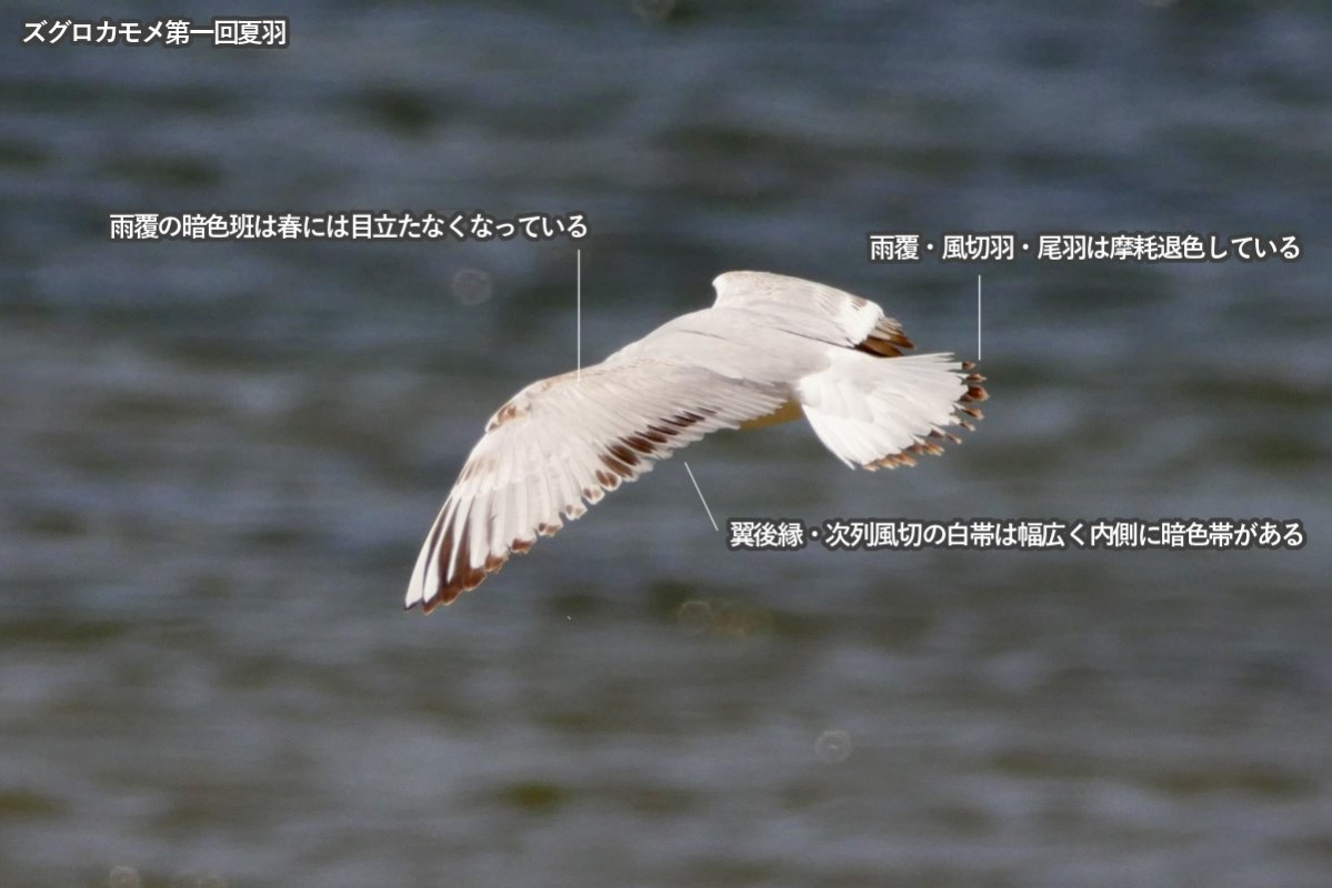 zugurokamom_1sts2