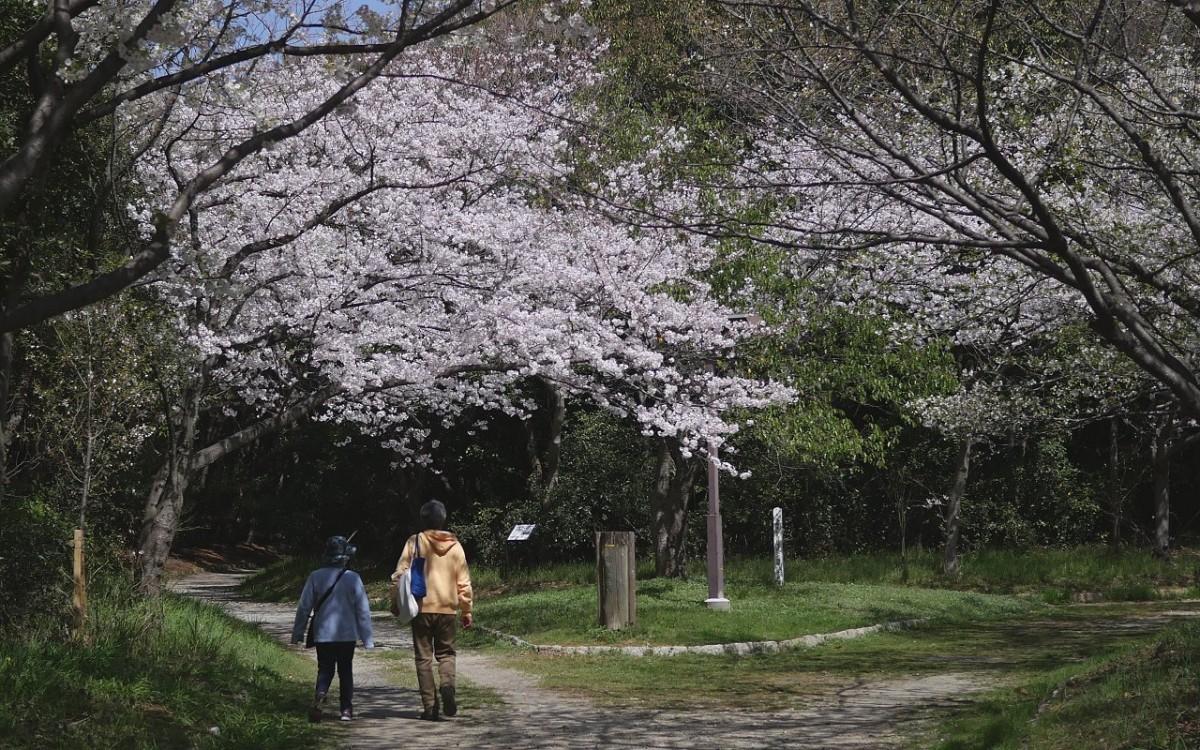 180330sakura